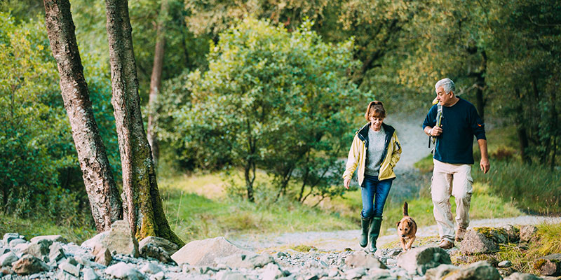 Image of a couple waling through the woods with a dog.