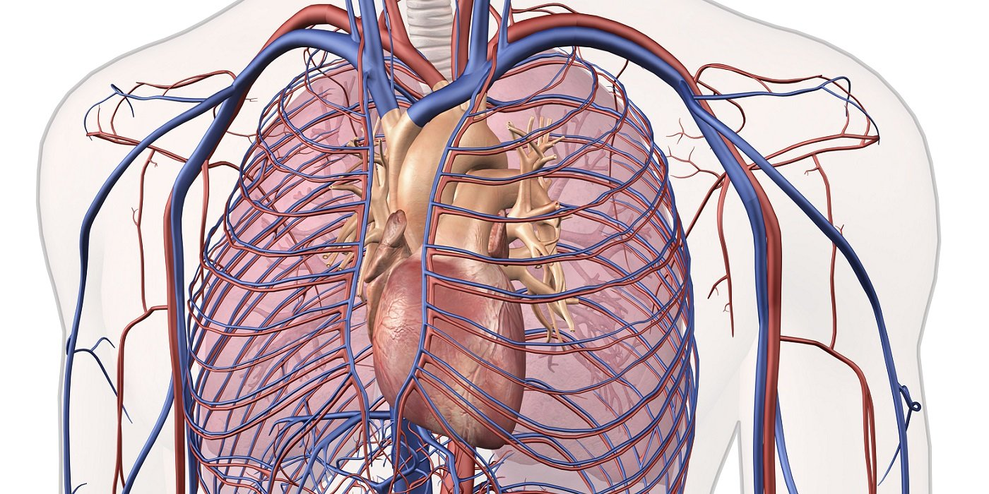 the bsc cardiovascular medicine intercalation degree is ideally suited to medical students planned a career as a cardiologist